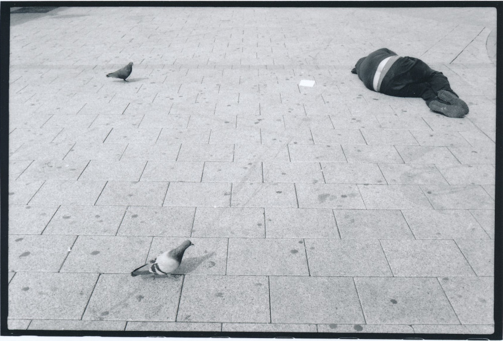 Serie - Vögel Auswahl B Scan (11)
