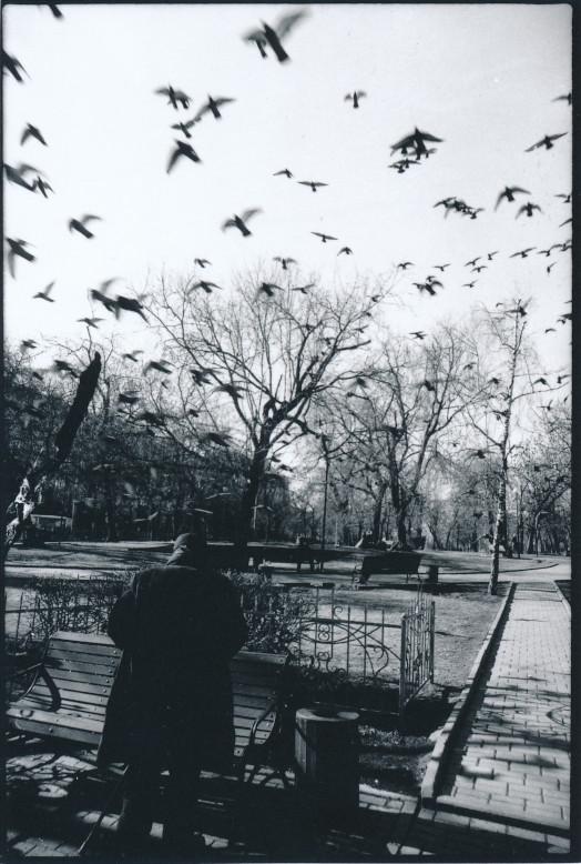 Serie - Vögel Auswahl B Scan (14)
