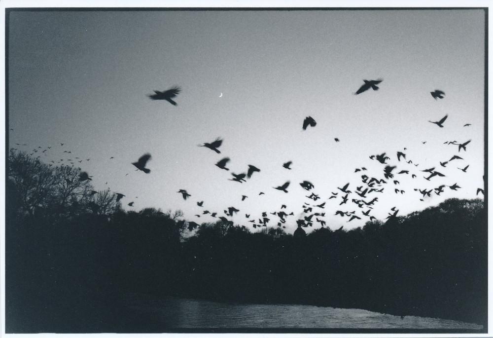 Serie - Vögel Auswahl B Scan (16)