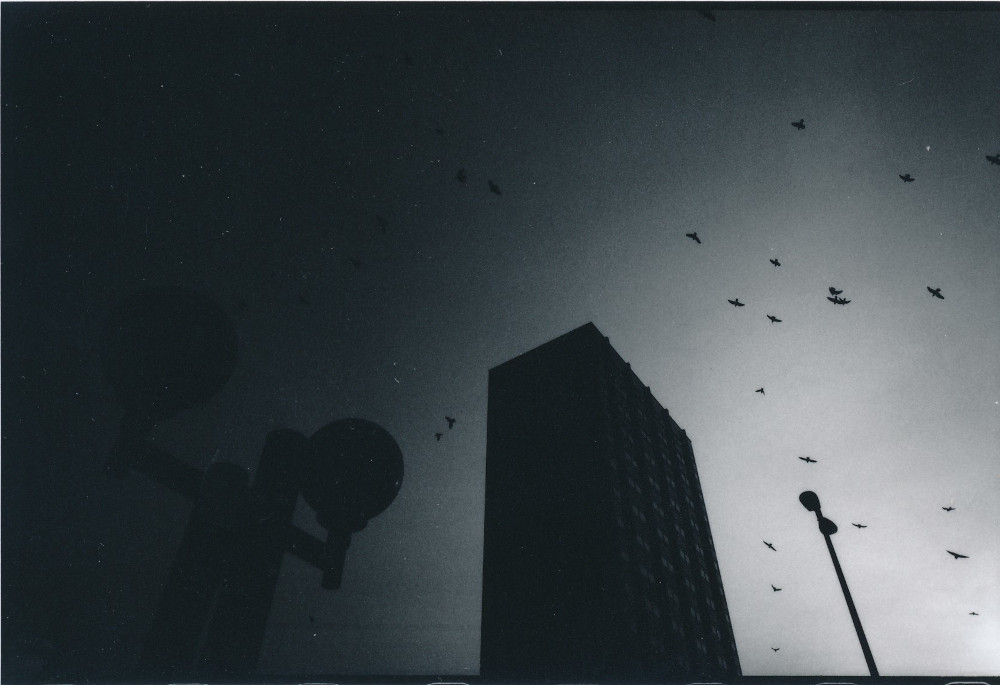 Serie - Vögel Auswahl B Scan (17)