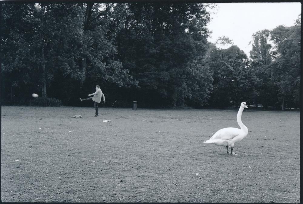 Serie - Vögel Auswahl B Scan (2)
